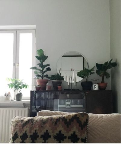 Home. Living room / Plants / Cat