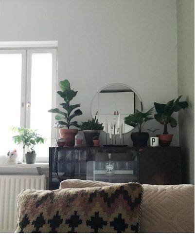 Home. Living room / Plants / Cat