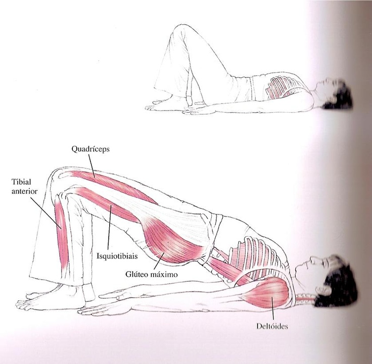 Central do Pilates: Exercícios de Pilates: Ponte de ombros