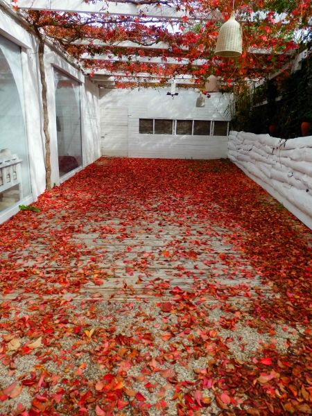 Red carpet, Ios island