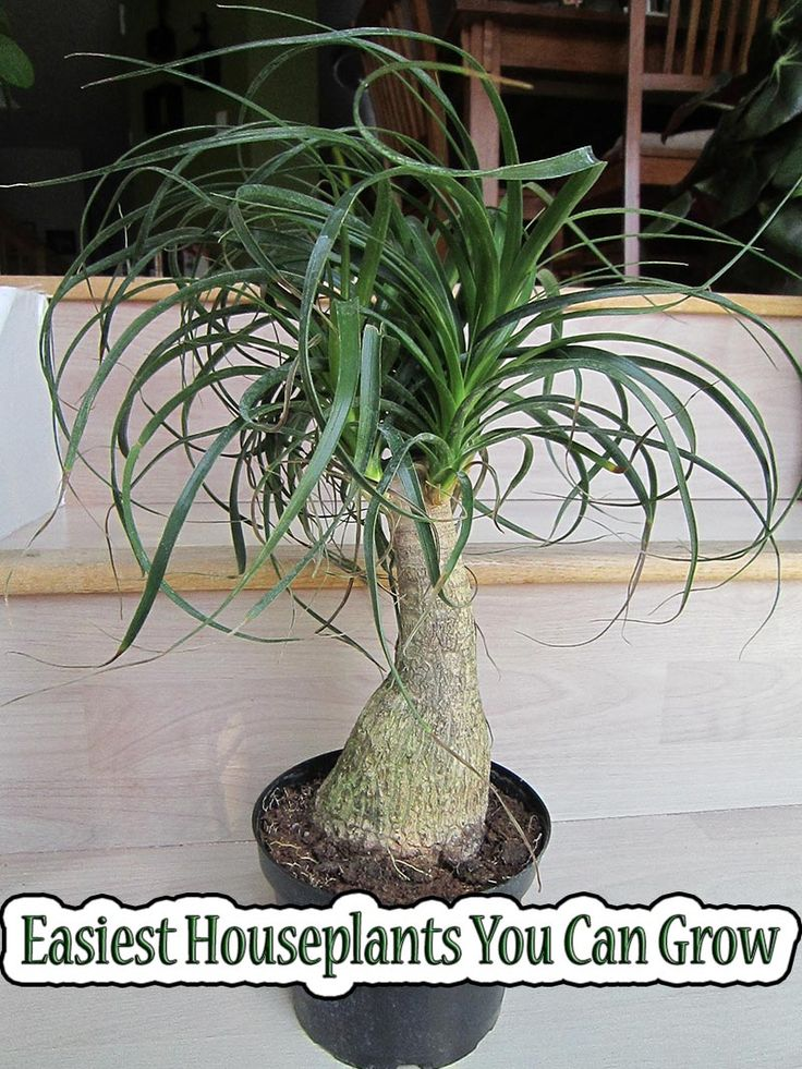 1000 ideas about low maintenance plants on pinterest for Low maintenance bushes to plant