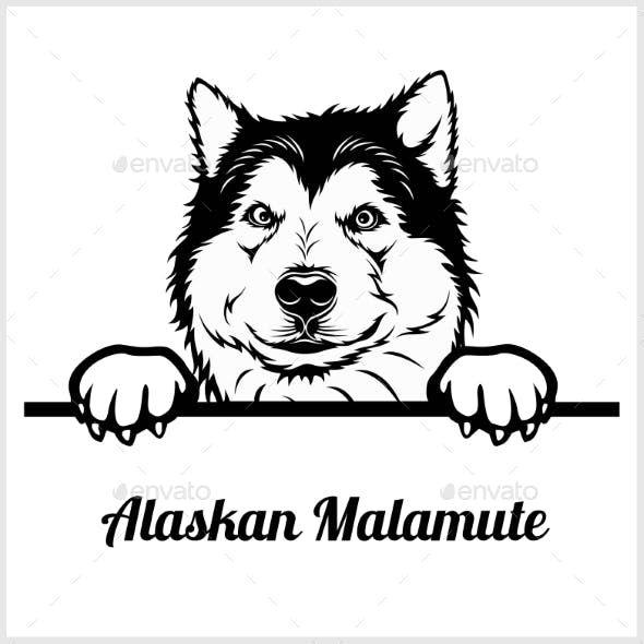 Alaskan Malamute Peeking Dog Face Dog Face Alaskan Malamute