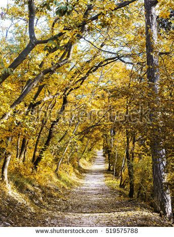 GOLDEN FOLIAGE IN THE FOREST  IN AUTUMN