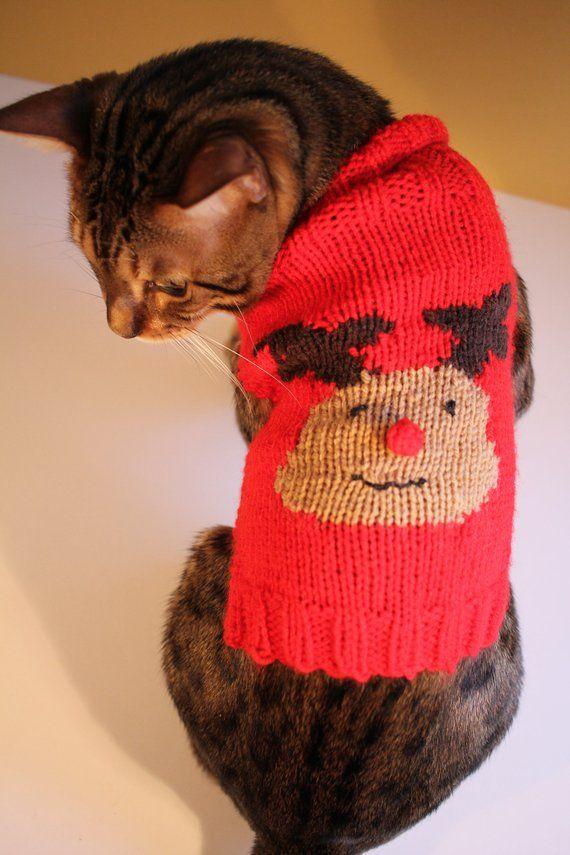 Traumhafte Weihnachtsgeschenke Für Katzen Auch Last Minute