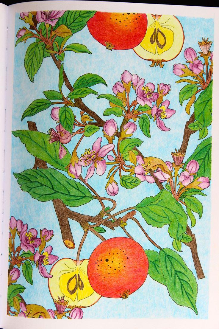 "Livre ""Jardins Extraordinaires"" Crayons de couleurs divers"