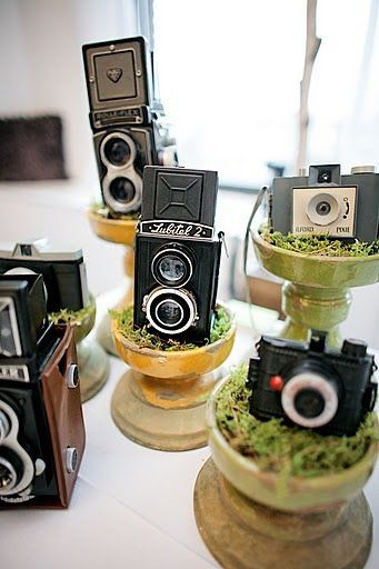 vintage camera decor, and my love of the garden!