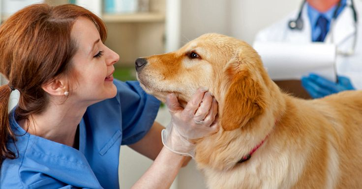 In a sea of Yelp listings, how do you find the right vet for you and your dog? Whether your dog is feeling under the weather or it s just time for a checkup, the veterinarian charged with keeping him in tip-top shape should be one that fits you and your dog s unique needs. This isn t a flip-a-coin decision—you re going to have to do some leg work to find a vet that fits all your requirements. If you re on the hunt for a vet and you don t know w