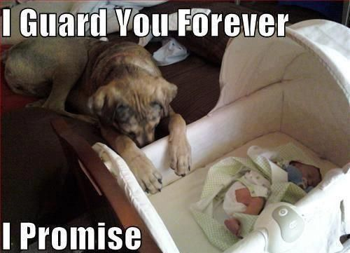 Awww: Aww, Bestfriends, Dogs Cat, Baby Need, Guard Dogs, Puppy, Loyalty, I Love Dogs, So Sweet