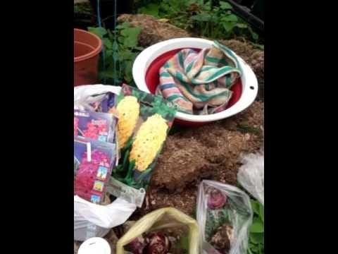 Обработка луковичных перед посадкой.(1)