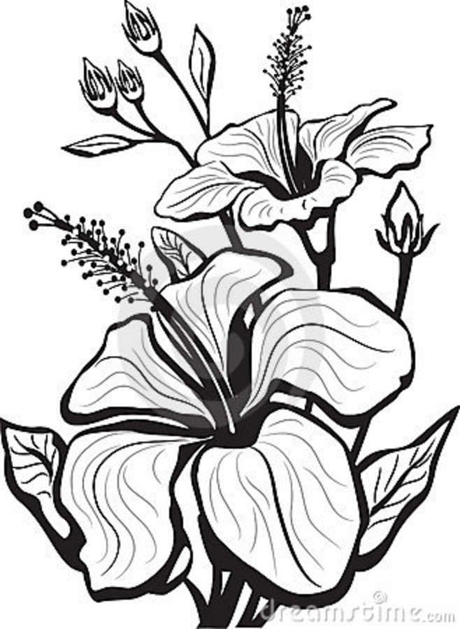 Beautiful Flower Line Drawing : Hibiscus flower drawing google search artsy stuff