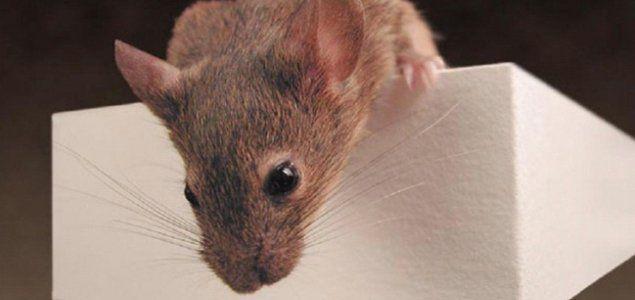 ओस्लो। प्लेन की फ्लाइट लेट हो जाना एक आम बात है, लेकिन किसी चूहे की वजह से फ्लाइट का 5 घंटों त