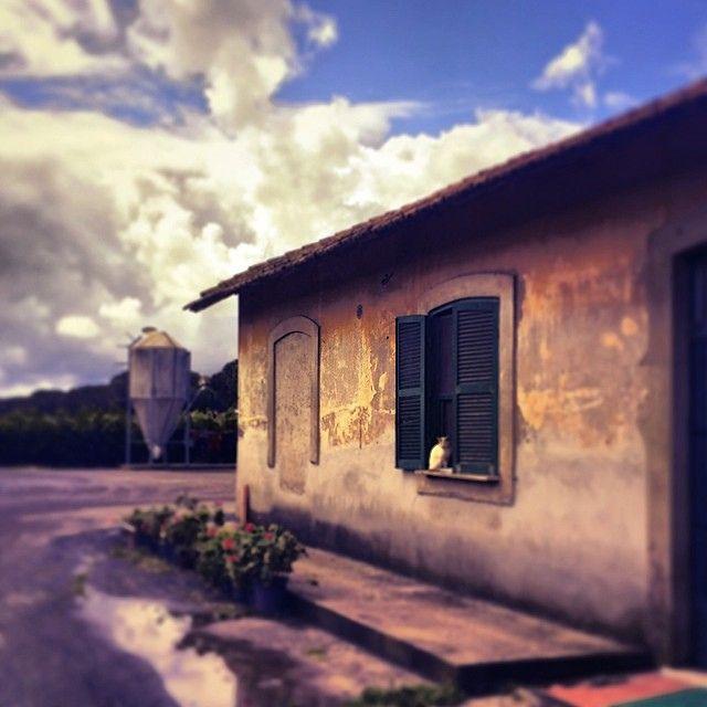 La #gatta alla #finestra di un #casale nella #campagna #romana sugli argini del #tevere #rome #roma #italy #italia #ig_italia #ig_roma #instascape #instalandscape #tenutadeldragone #farm
