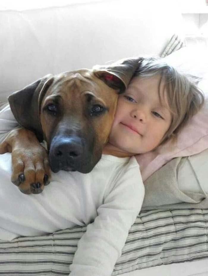 Fabulosas imágenes que prueban que los perros son parte de la familia