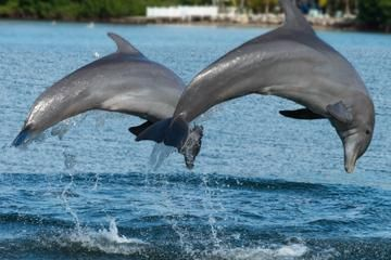 The Top 45 Jamaica Tours & Things to Do with Viator Tomorrow, This ...