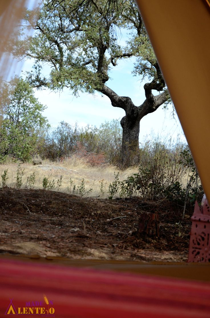Glamping canvas tent view.