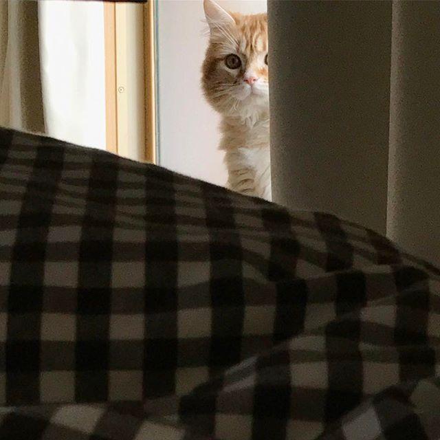 エール、初めての薬💊 パウチに混ぜたら、きれーいに食べてくれました!良かった😊 治るとよいね!!!🙏 #cat #ねこ#ネコ #猫 #子猫 #愛猫 #고양이 #にゃんこ #kitty #ねこのきもち #足長マンチカン #マンチカン部 #マンチカン #レッドタビー  #みんねこ #エールパワー #ペコねこ部 #ねこ部  #にゃんすたぐらむ #munchkin #長毛 #猫部 #猫好き #nyaspaper #猫のいる暮らし #猫との生活 #幸せな生活