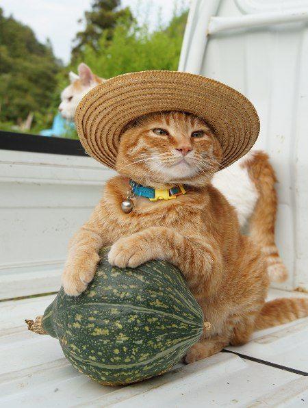 Gato fazendeiro♡♡♡                                                                                                                                                     Mais