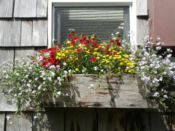 Window flower boxes are my favorite