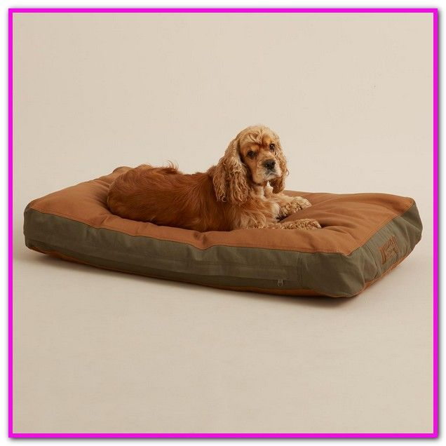Extra Large Dog Beds Clearance Australia Extra Large Dog Bed Clearance Pu Suede Washable Dog Bed Medium This Extra Large Dog Bed Dog Bed Large Pet Sofa Bed