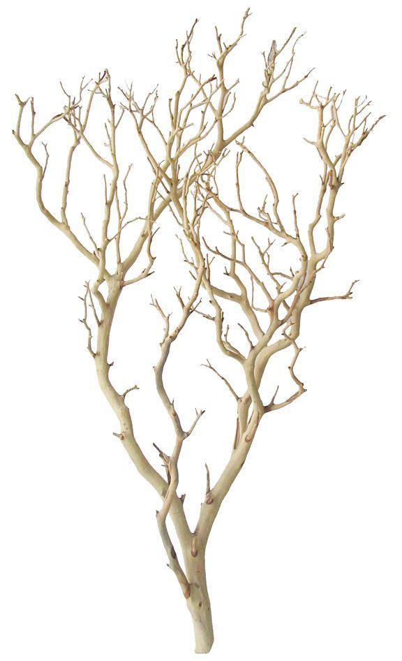 Manzanita Christmas Tree