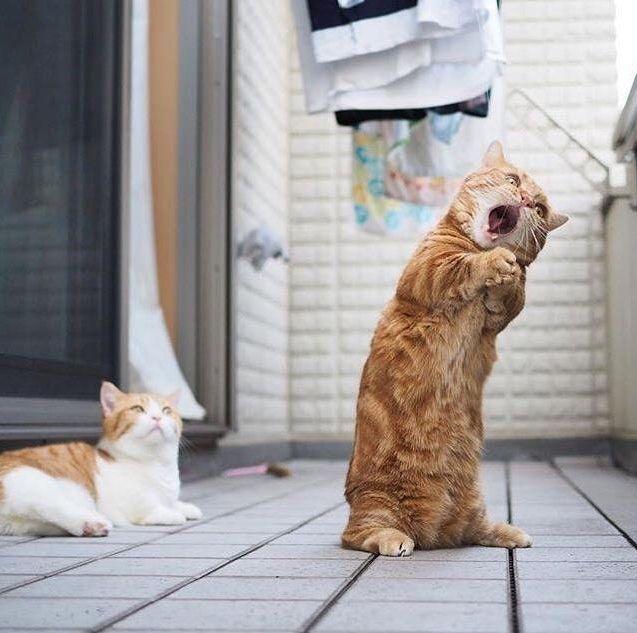 20 witzige Momente mit Katzen. – Marion