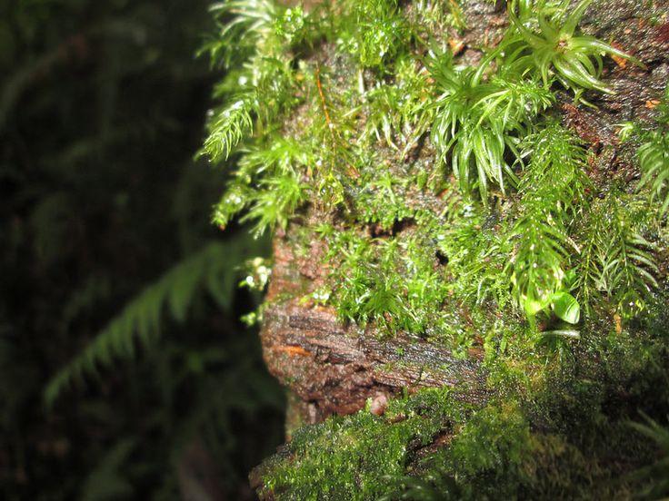lumut hutan hujan 2