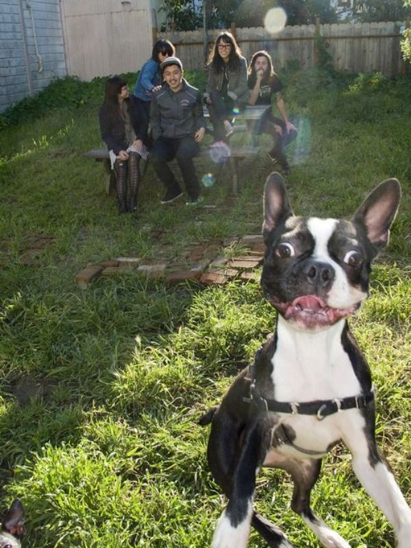 Best Doggy Photobombs Images On Pinterest A Month - The 39 funniest animal photobombs of all time
