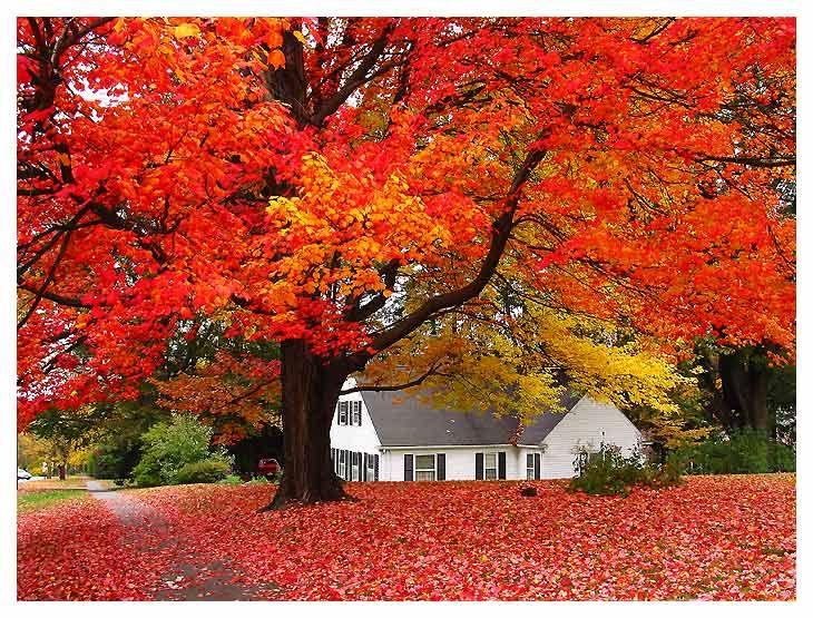 .Fall Leaves, New England, Autumn Leaves, Favorite Time, Doors County, Autumn Fall, Beautiful, Favorite Seasons, Trees