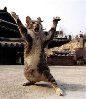 ねこ!猫!様々な可愛いポーズ! おもしろ画像集のまとめ
