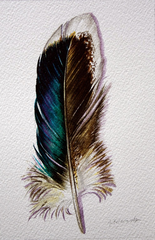 feather in watercolor