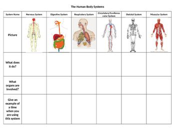 Human Body Systems Graphic Organizer | science human body | Body ...
