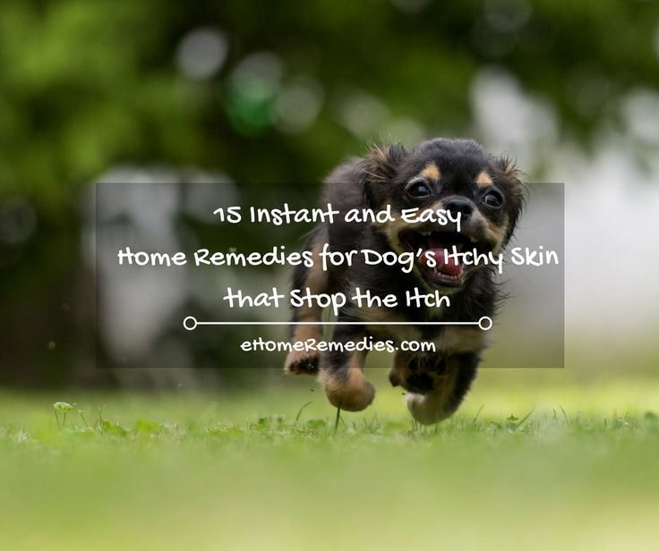 In order to give your dog relief and even a cure for their itching, the following home remedies for dog's itchy skin can be used.