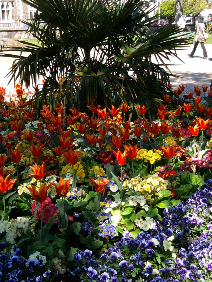 still an oasis of beauty - the Christchurch Botanic Gardens