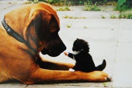 Don't tell anyone we're friends!Like A Boss, Dogs Cat, Pets, Funny, Adorable, Things, Kitty, Big Dogs, Animal