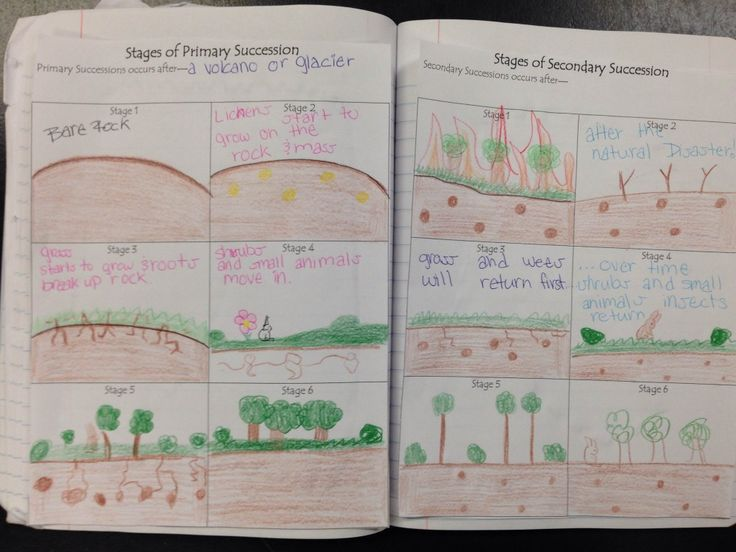 Science 7 - Unit: Interactions & Ecosystems   Primary and secondary succession notes