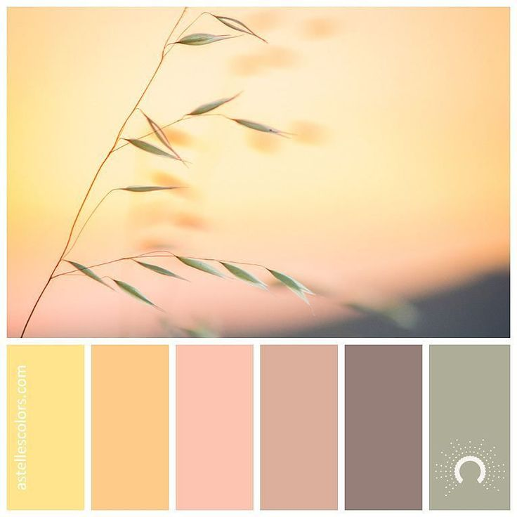 Color inspiration [ wind chime ] Elijah Hiett @elijahhiett427 - thank you for sharing this beautiful picture! picture source @unsplash color palette no 196 color names: Flavescent Macaroni and Cheese Apricot Pastel Pink Cinereous Laurel Green name source @coolors_co Which color is your favorite in this palette? - Mine is the combo of Cinereous and Laurel Green for hex codes hop on over to my website astellescolors.com