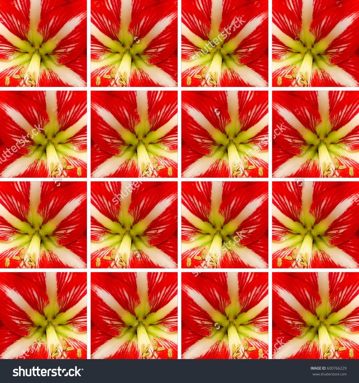 Background made of identical #square shapes filled with #Amaryllis #flower #texture