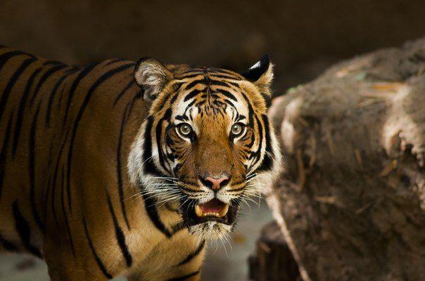 Тот, кто находит удовольствие в уединении, либо дикий зверь, либо Бог.  Аристотель