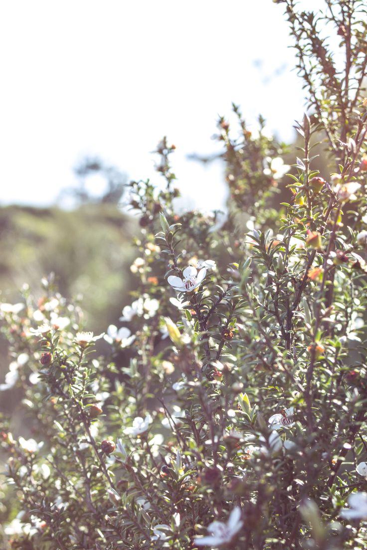 flowers. waitawa.