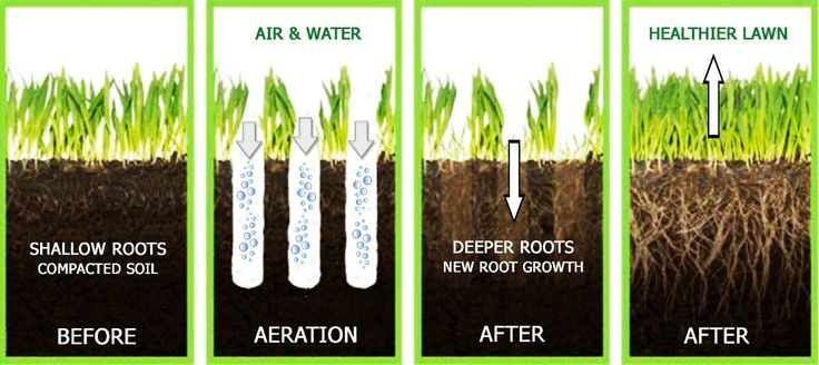 An overview of how lawn aeration works
