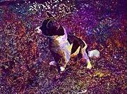 """New artwork for sale! - """" Dog Rooney Jack Russell Dog Model  by PixBreak Art """" - http://ift.tt/2uLPHas"""