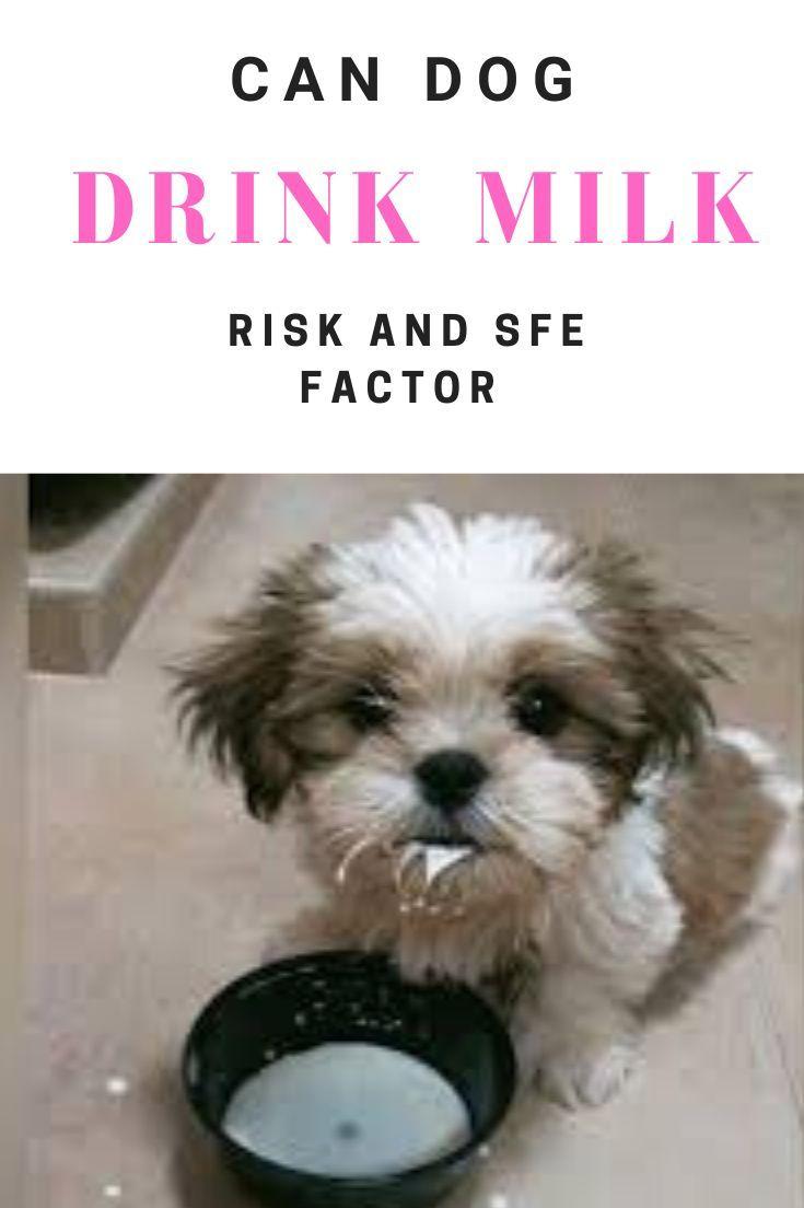 Can Dogs Drink Milk Benefits Risk Factors Of Milk For Dogs In 2020 Drink Milk Drink Milk Benefits Dog Milk