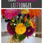 How to Make Cut Flowers Last Longer - up to a Month Longer!! - Raining Hot Coupons