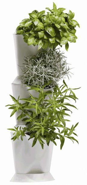 dobromysl (oregano) máta pěstování vertikální zahrada květiny byliny květináč truhlíky zelenina