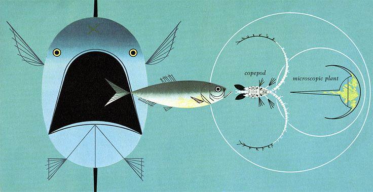 The golden book of biology illustration