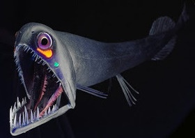 Monsters of the Mariana Trench | Learnist