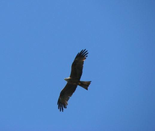 Birds of prey in the Douro region (Portugal).