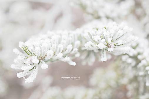 AlexandraValentovic / Biely sen / winter