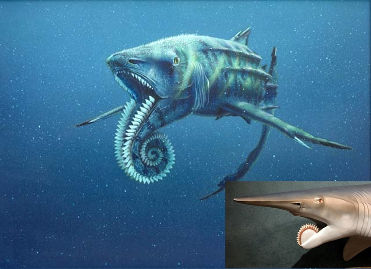 Helicoprion, a prehistoric shark. WTH.. never heard of ...