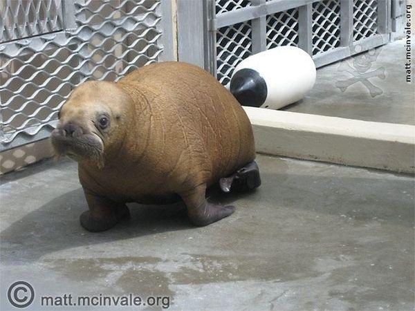 Strange Baby Animals